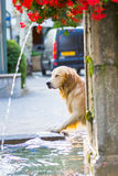 Doggy is taking a bath Royalty Free Stock Image