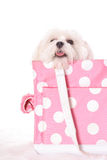 Doggy travel Royalty Free Stock Photography