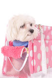 Doggy travel tote Stock Image