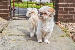 Doggy trwanie outside przed drzwi Fotografia Stock