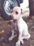 doggy royalty-vrije stock fotografie