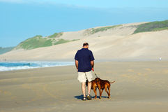 Doggy walk. An elderly man walking his Rhodesian Ridgeback hound dogs on the beach during summer in South Africa Stock Image