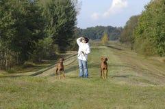 Doggy walk Stock Photography