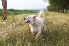 Doggy Royalty Free Stock Photo