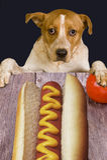 Doggy wants dog. Stock Image
