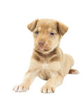 Doggy. On a white background isolated Stock Images