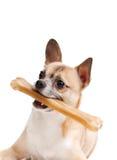 Doggy z kością zdjęcie stock
