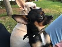 Doggys Photo stock