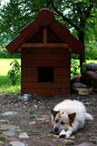 Doghouse. Dog sleeping in front of doghouse Royalty Free Stock Image