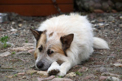 Doghouse. Dog sleeping in front of doghouse Royalty Free Stock Photos
