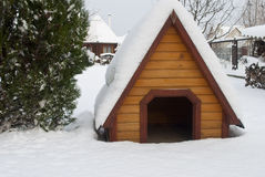 Doghouse under the snow. Doghouse covered by snow stand on the yard near the thuja Royalty Free Stock Images