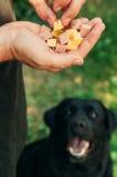 Doghunter: mannen ger hundmat med spikar royaltyfria bilder