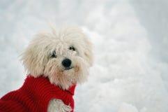 Dogie lindo foto de archivo