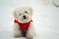 Dogie mignon Photo stock