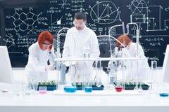 Doglądający laborancki eksperyment Fotografia Stock