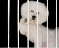 Doglocked Stock Photo