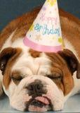Dogo del cumpleaños fotos de archivo