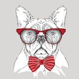 Dogo del retrato de la imagen en el pañuelo y con los vidrios Ilustración del vector Imagenes de archivo
