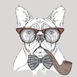 Dogo del retrato de la imagen en el pañuelo y los vidrios con el tubo de tabaco Ilustración del vector Foto de archivo