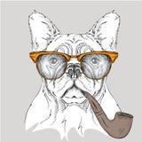 Dogo del retrato de la imagen en los vidrios con el tubo de tabaco Ilustración del vector Imágenes de archivo libres de regalías
