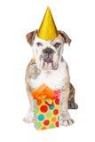 Dogo divertido con el presente de cumpleaños Fotos de archivo libres de regalías