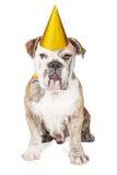 Dogo divertido de la fiesta de cumpleaños Fotografía de archivo libre de regalías