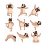 Dogo divertido en diversas actitudes de la yoga Forma de vida sana Perro que hace ejercicios físicos Animal doméstico de la histo libre illustration