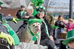 Dogo en el traje verde para el día de St Patrick fotografía de archivo libre de regalías