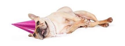 Dogo francés cansado de la fiesta de cumpleaños Fotos de archivo libres de regalías