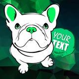 Dogo francés Ejemplo del vector para una tarjeta o un cartel Impresión en la ropa Perrito lindo Perro pedigrí Imagen de archivo