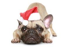 Dogo francés en un sombrero de la Navidad imagen de archivo libre de regalías