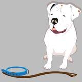 Dogo grande Foto de archivo libre de regalías