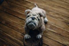Dogo hecho punto del perro en fondo de madera Imagenes de archivo