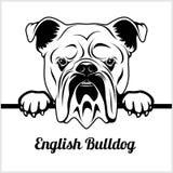 Dogo inglés - mirando a escondidas perros - - cabeza de la cara de la raza aislada en blanco ilustración del vector