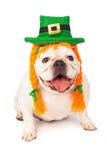 Dogo que lleva trenzas irlandesas del sombrero y del pelo fotografía de archivo libre de regalías
