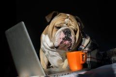 Dogo que se sienta delante del ordenador en una tela escocesa imágenes de archivo libres de regalías