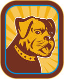Dogo y híbrido del terrier de Boston Foto de archivo libre de regalías