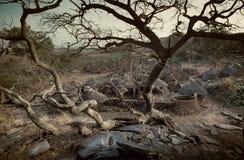 Dogon村庄, Dogon土地, Tireli,马里,非洲 免版税图库摄影