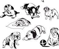 Dogos Imagen de archivo libre de regalías