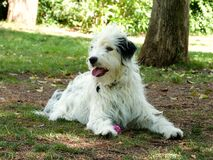 Dogpark friend: Mali Stock Image