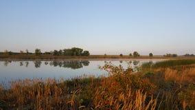 Dogrose куст на банке пруда Стоковые Изображения RF