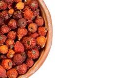 dogrose ягод предпосылки Стоковые Изображения