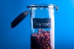 Dogrose Stock Photos