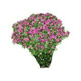 Dogrose arbusto com flores vermelhas Imagem de Stock