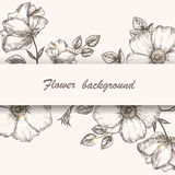 Dogrose background 2 Stock Images