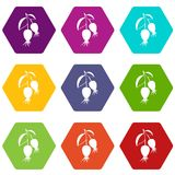 Dogrose berries branch icon set color hexahedron Royalty Free Stock Photo