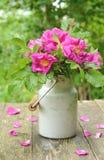 Dogrose-Blumenstrauß in der alten Milchkanne Lizenzfreie Stockbilder