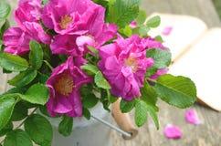 Dogrose-Blumenstrauß in der alten Milchkanne Stockbild