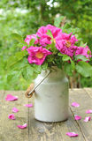 Dogrose bouquet in old milk churn Royalty Free Stock Images