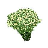 Dogrose buske med vita blommor Royaltyfri Fotografi